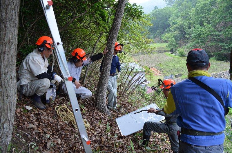 山に入って樹を見ながら伐り方の説明