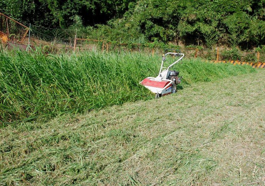 腰丈の密生した草を面白い様に爆刈