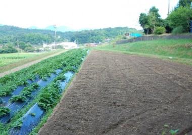 トラクターで2回耕起して草をすき込む