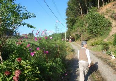 朝の散歩は家の前の田んぼを一回りコース