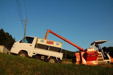 コンバインのタンクが満杯になるとすぐに乾燥機へ運ぶ