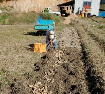 畑、全面を草刈りしたらスッキリ