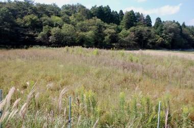 ニンニク植付予定地周辺は草が伸び放題