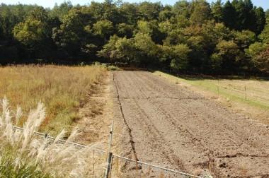 ハンマーナイフモアで草を破砕してトラクター耕起