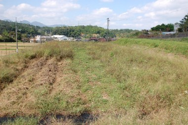 畝の草刈をしながら少しづつ掘ります