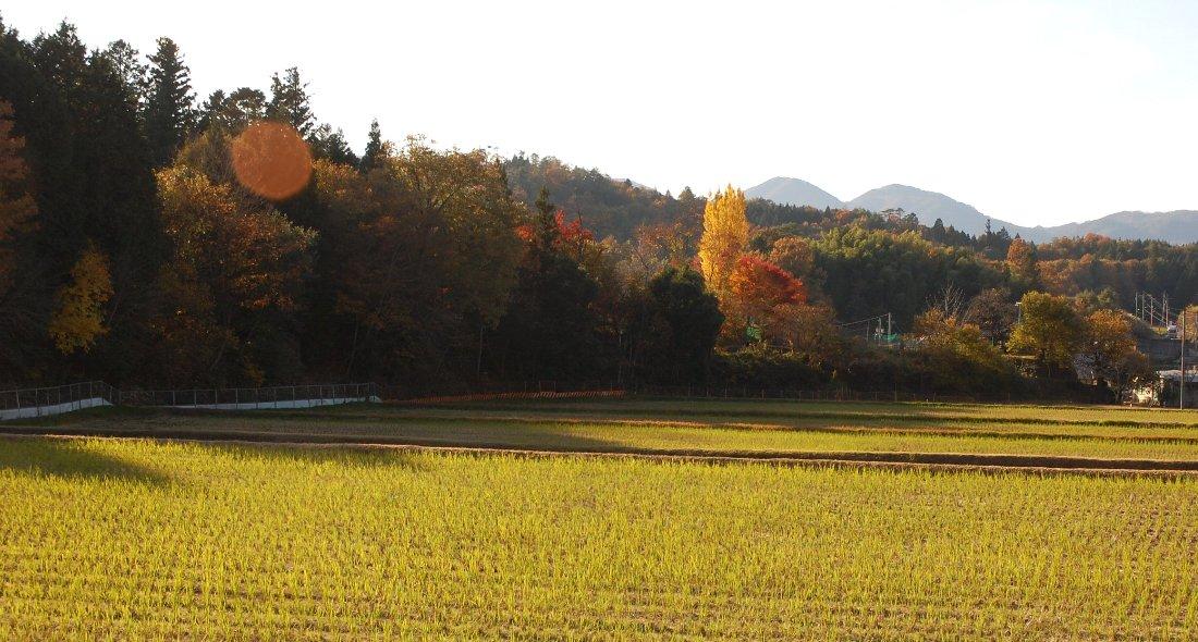 今が盛りの秋色を夕日が応援している、次の雨までは楽しめそう