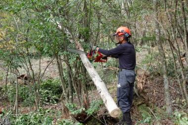 倒木も伐って片付けます