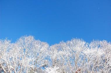 裏山のクヌギ林