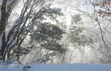 林を眺めていたら枝の雪が突然 流れるように舞い落ちた