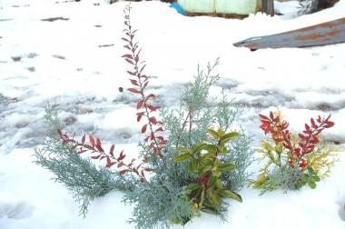 花に雪なのか雪に華なのか?