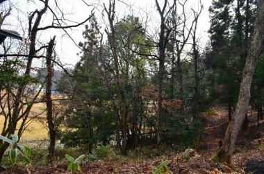 枯木危険木の伐採前