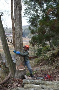 これから伐倒するクヌギは吉さんより大きい
