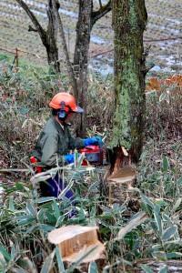 枯れ木の処理