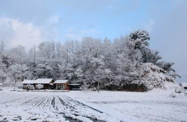 写真右の斜面の上大きな樹の横にあずま屋を建てる予定