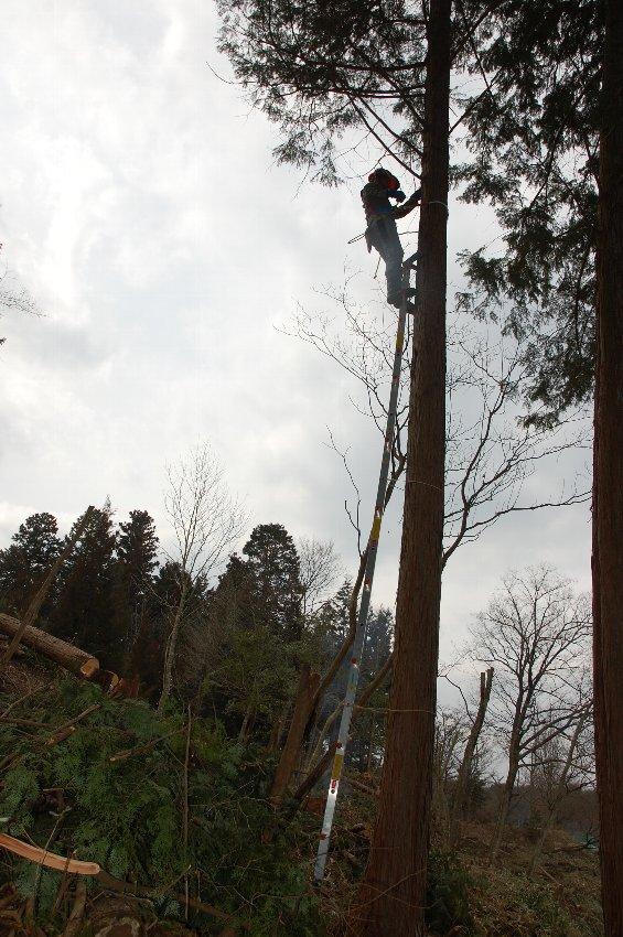桧の幹にワイヤーロープを取付