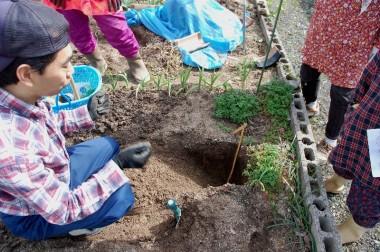 畑を掘って土層の観察