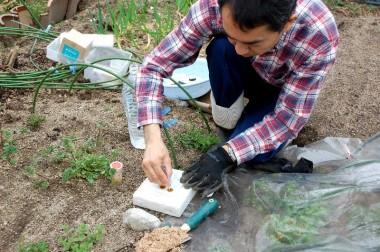 土のPHやEC値を測る