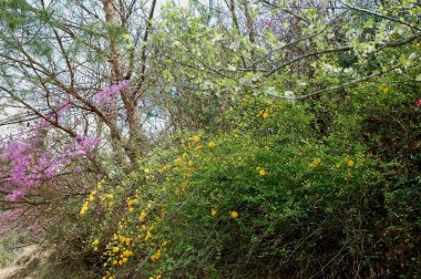 よく見るとヤマブキ、ツツジ、スモモ、椿などが咲いている