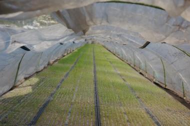 トンネル内部の様子