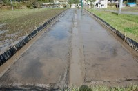 苗床に根切りネットを敷いたところ