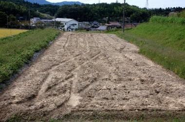 草を鋤込んだ後に米糠散布 この後もう一度耕して完了、米ぬかと草が発酵して肥料になります