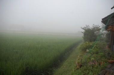 6時に千代田を出るときには霧の中