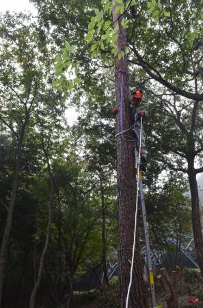 樹を引っ張るスリングベルトを取り付ける