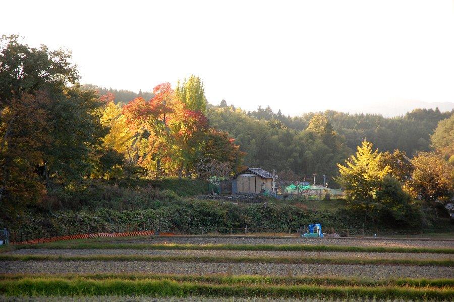 終わる頃には額田部神社境内の樹を夕日が染めていた