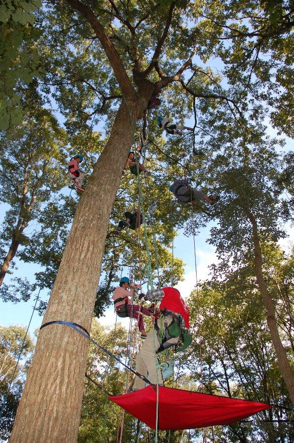 1本の樹に5~6人は登っていた