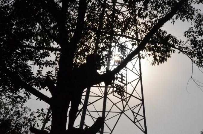 ② 危険木処理は逆光等も考慮して作業時間帯を決める