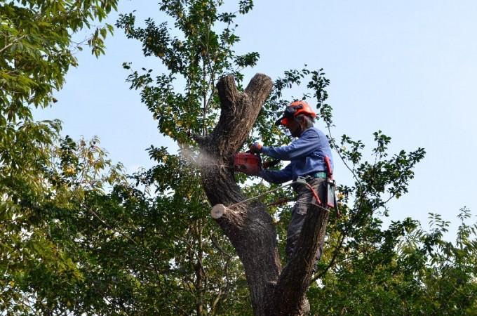 ④ 枝が終わったら幹を少しづつ切り落とす