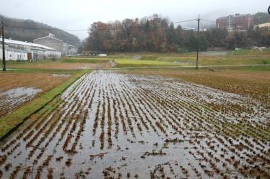 今回の雨で水浸しの田んぼ(家の前)