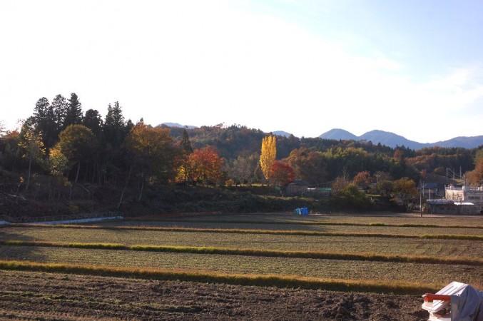 この5枚の田んぼで稔った米を販売しています