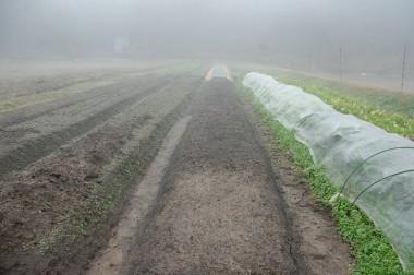 この地方の朝は霧が濃い