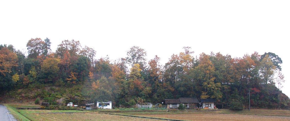 収穫祭の会場は裏山の右端辺り