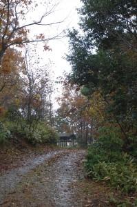 裏山への登り路