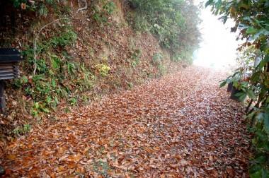 落葉を踏むとカサカサと乾いた音が響く、郵便受けをのぞきに行くのが楽しみ