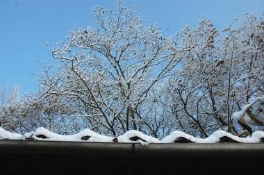 屋根越しに見た裏山の樹