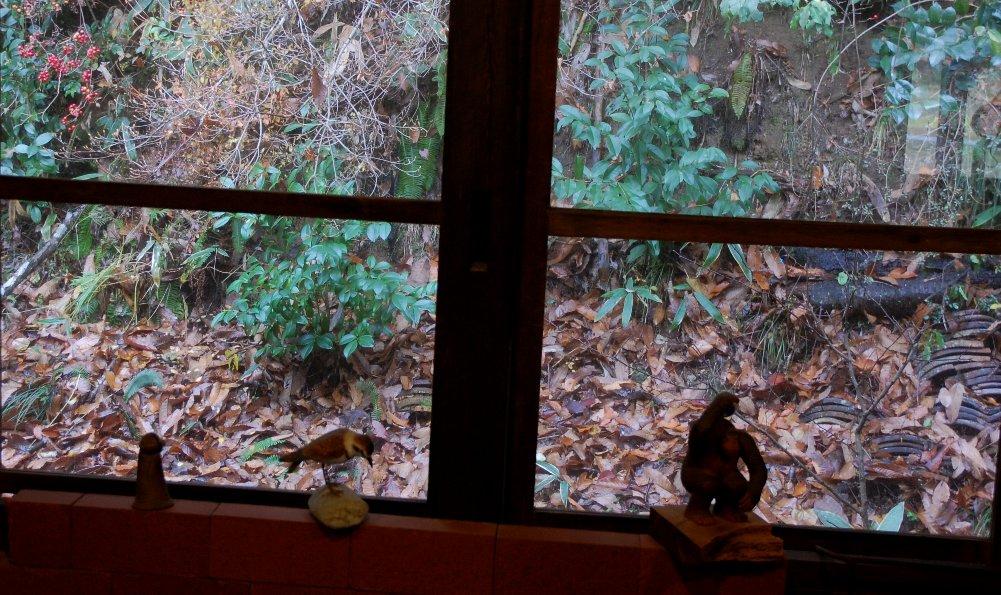 囲炉裏の部屋から軒先の裏山を見る