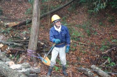 樹が倒れるまで切らないで、最後はチルホールで引いて倒す