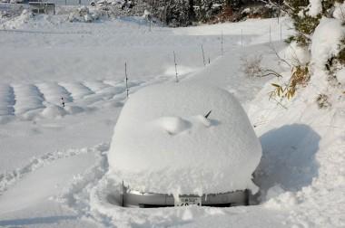 フィットの雪ダルマ