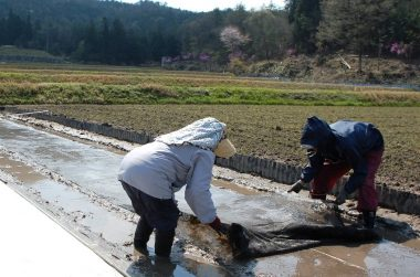 土の上に 根切りネット を敷いて苗箱を取り易くします
