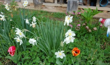 庭では草と花が一緒(こお言うのを草花
