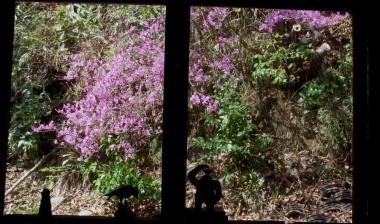 囲炉裏の部屋から裏山のツツジを見る