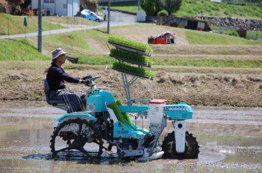 一般の田植機の植え付けは一番後ろだけど、みのる式は前輪と後輪の間で植付