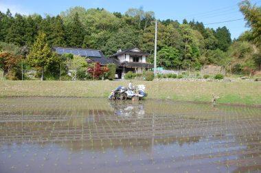 松さんの自宅前で植える