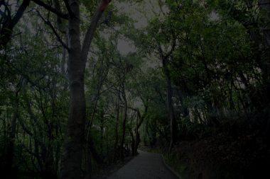 昼でも暗い神社の森の裏参道