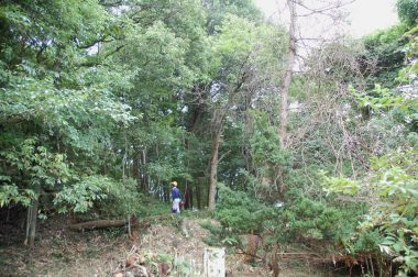 カラマツや栗は枯枝や藤づるを落とし、松は伐倒