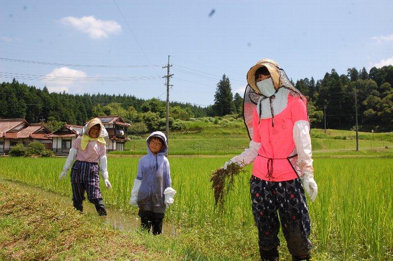 小学1年生の幸太は、田の草取りを初体験