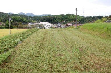 収穫の終わった畑はハンマーナイフモアで草の処理を終える